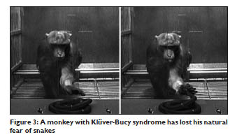 kluver bucy syndrome monkey