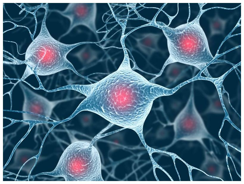 Cells in the adult brain