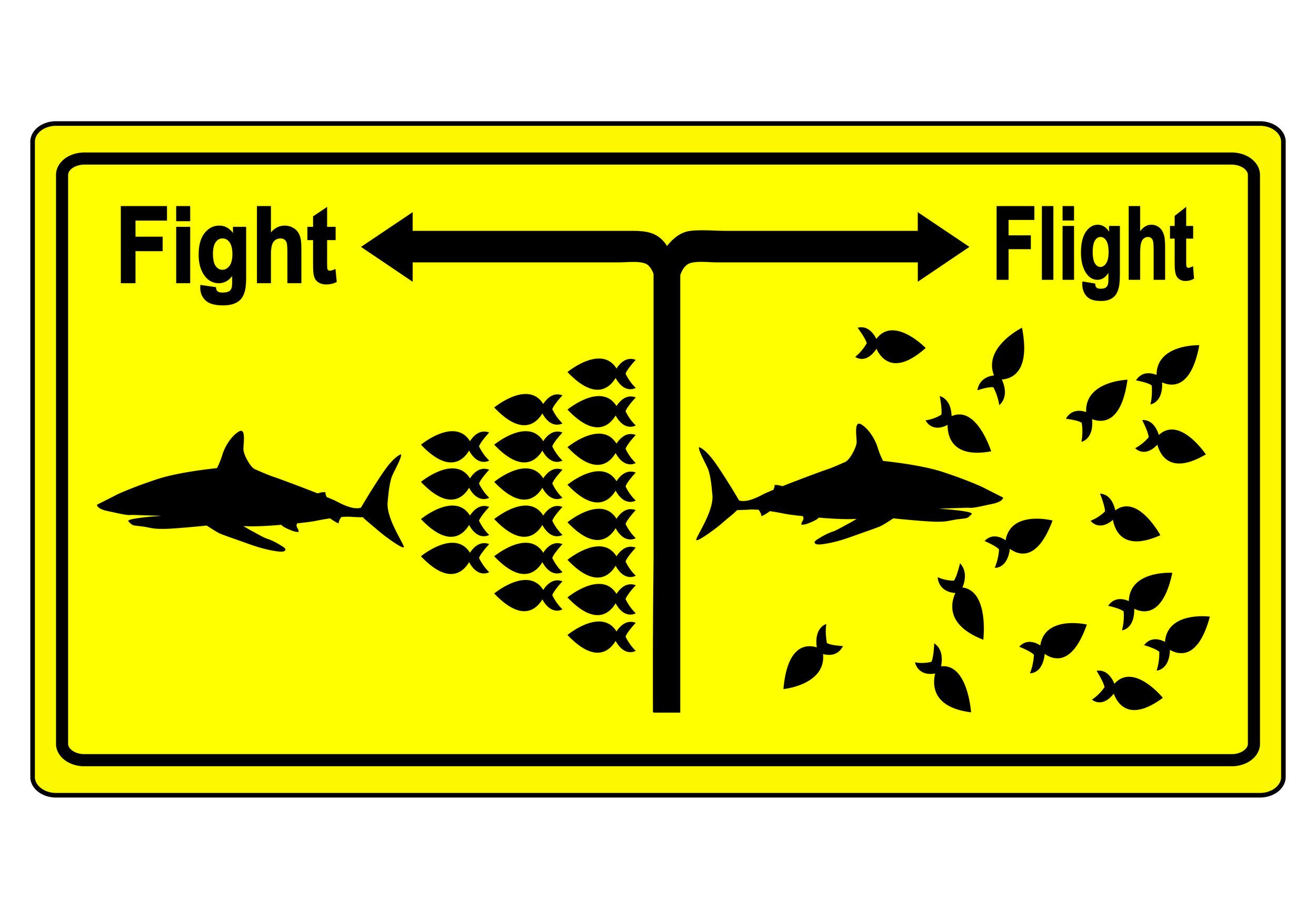 fight or flight response James-Lange theory