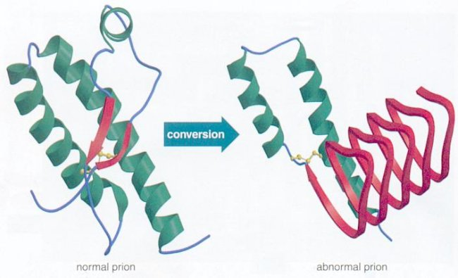 prion disease protein