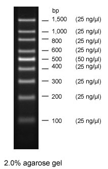 DNA ladder gel electrophoresis