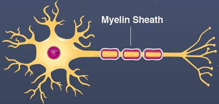 glia myelin