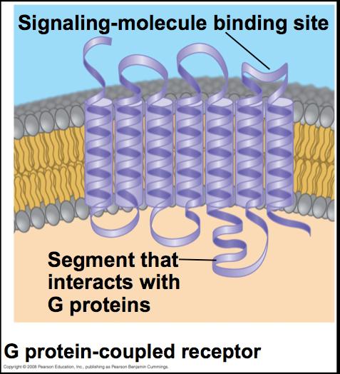 trace amine associated receptor
