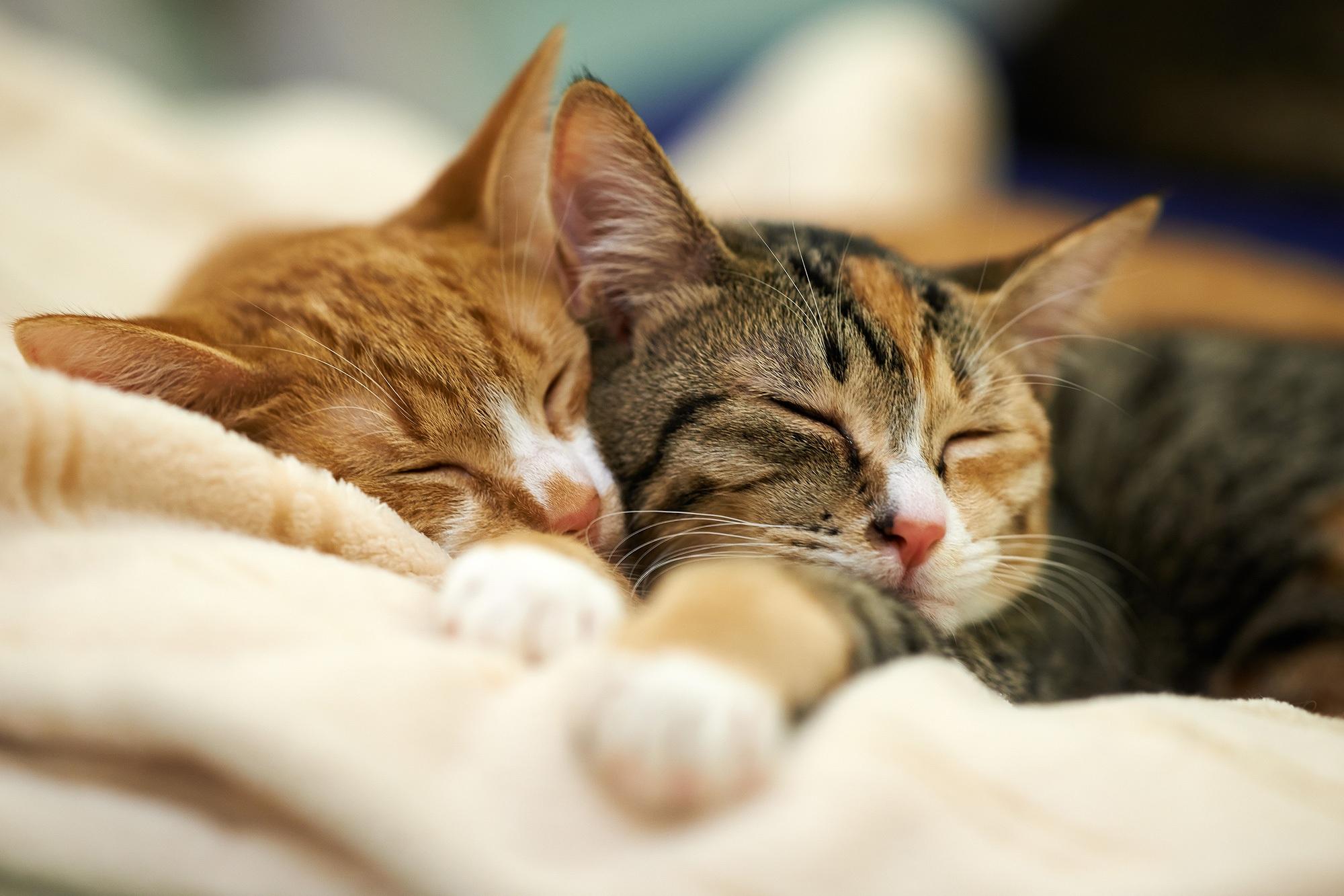 adaptive inactivity theory of sleep