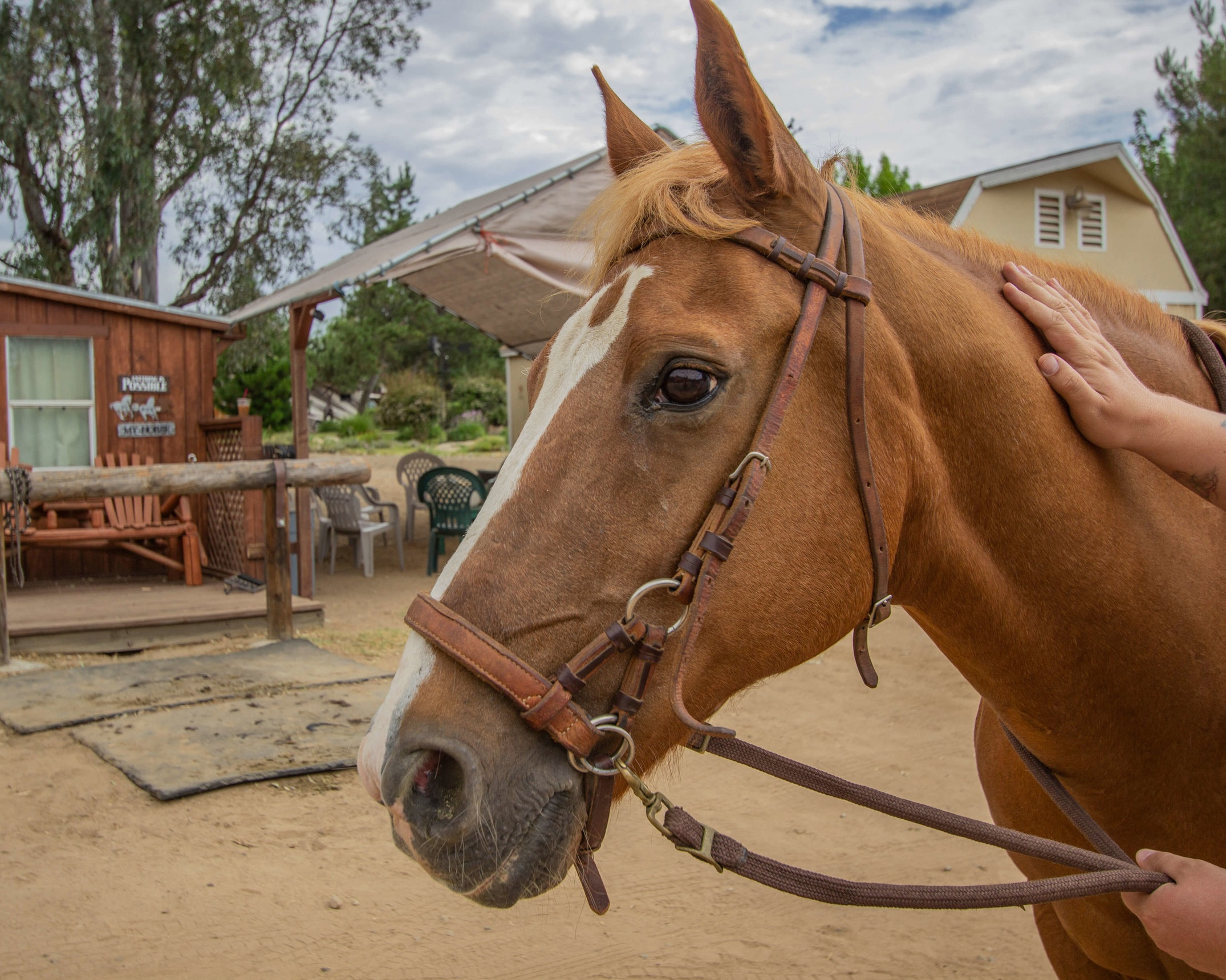 Communicating+With+Horses