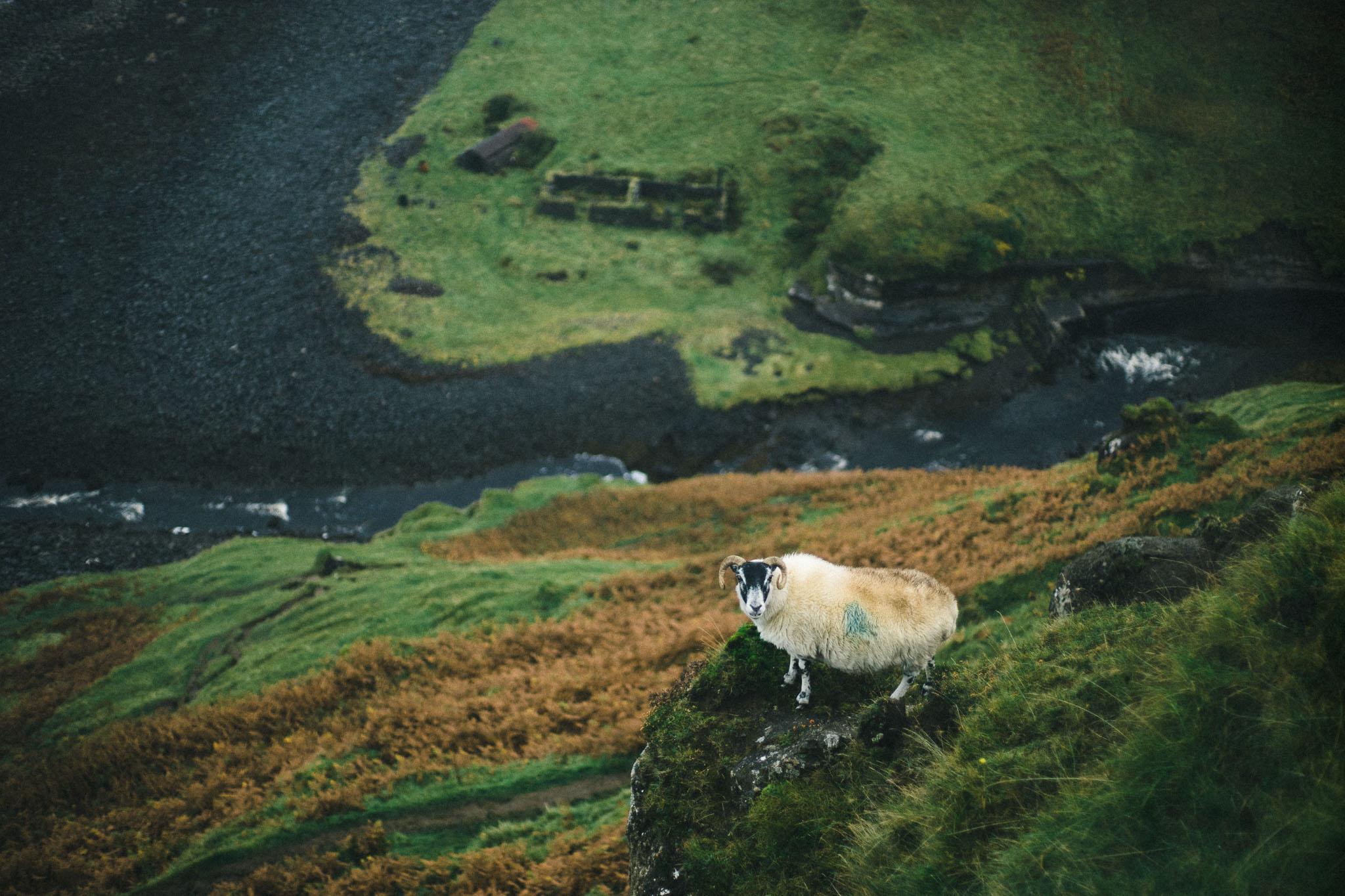 Best of Scotland 2017054.jpg