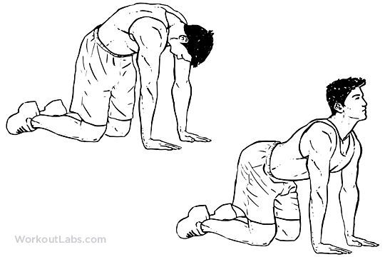 Cat_Back_Stretches_M_WorkoutLabs.png