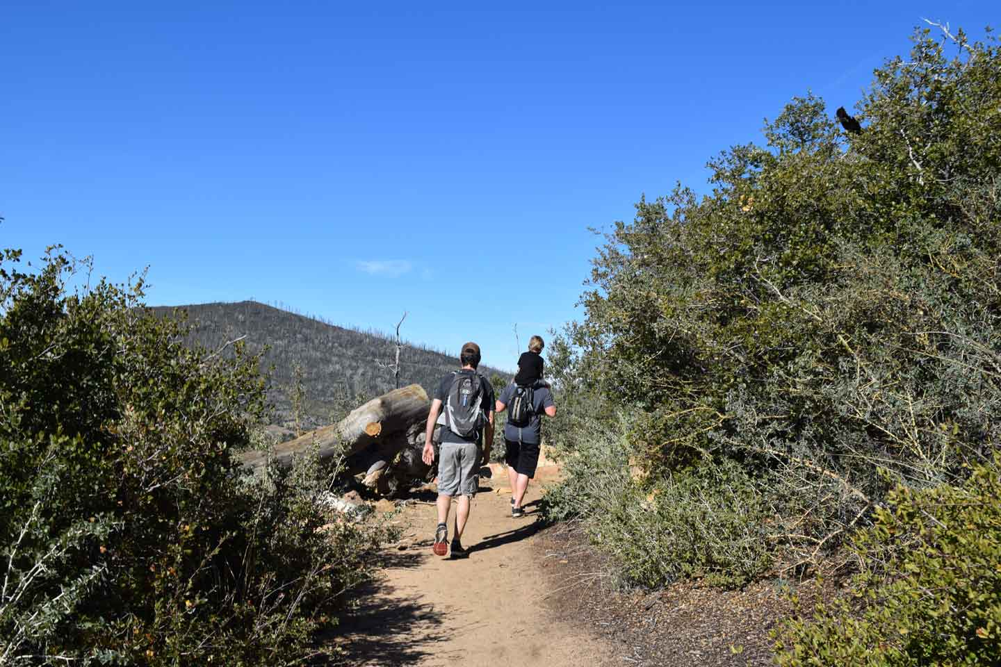 William Heise County Park - 4945 Heise Park Rd., Julian • 760-765-0650Canyon Oak Trail: 1.25 miles that connects to the Desert View Trail.Kelly Ditch Trail: 5.75 miles, great for walking or riding horses. Trail connects the park with Cuyamaca Rancho State Park and Lake Cuyamaca.