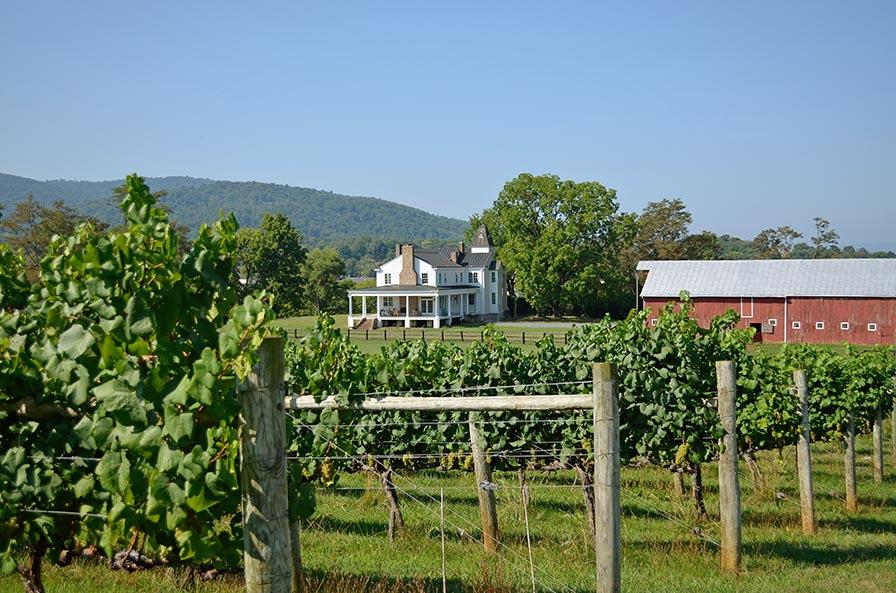 Boissard vineyard_0009_72_896_6.jpg