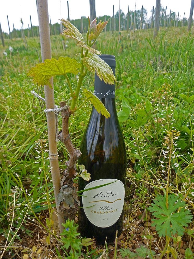 2017 Village Chardonnay