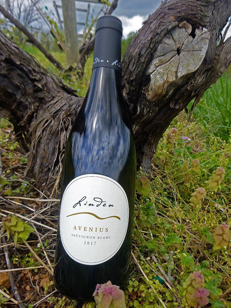 2017  Avenius  Sauvignon Blanc