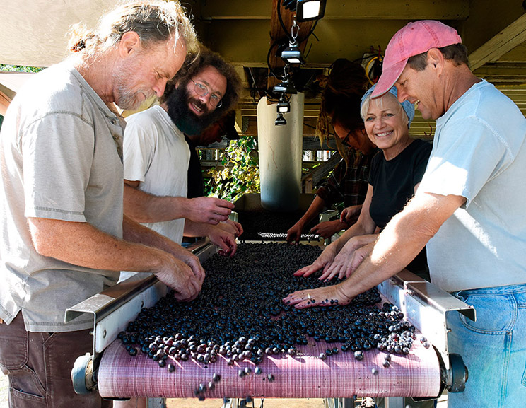 At the sorting table, from left to right: Jim Law, Jonathan Weber, Shari Avenius, Richard Boisseau