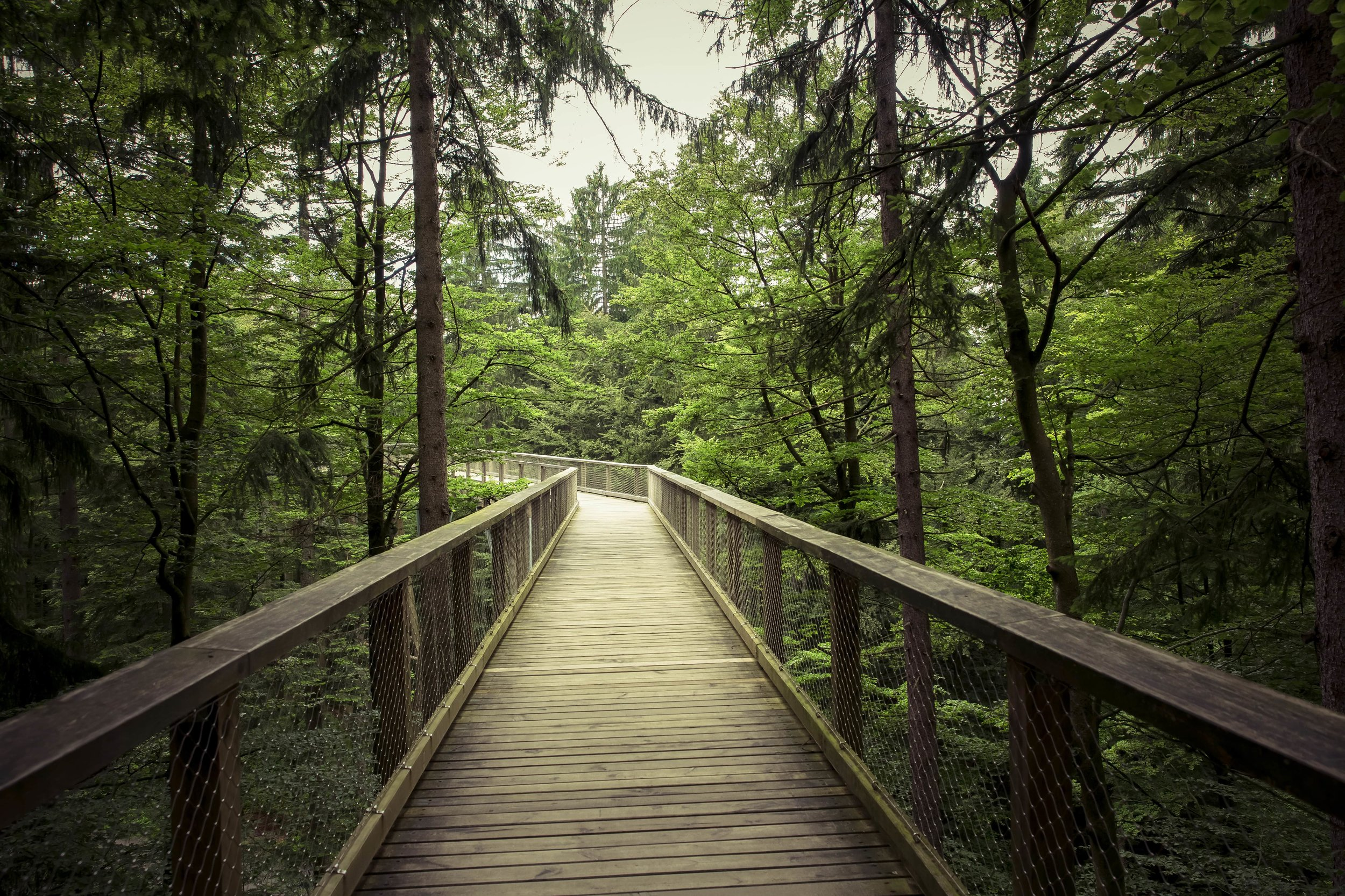 wooden bridge surrounded by green foliage