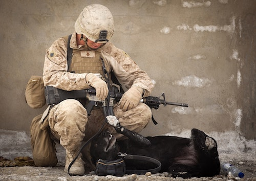 soldier playing with dog