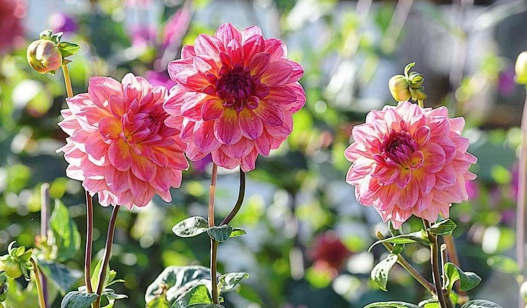 Nature's Beautiful Blooms