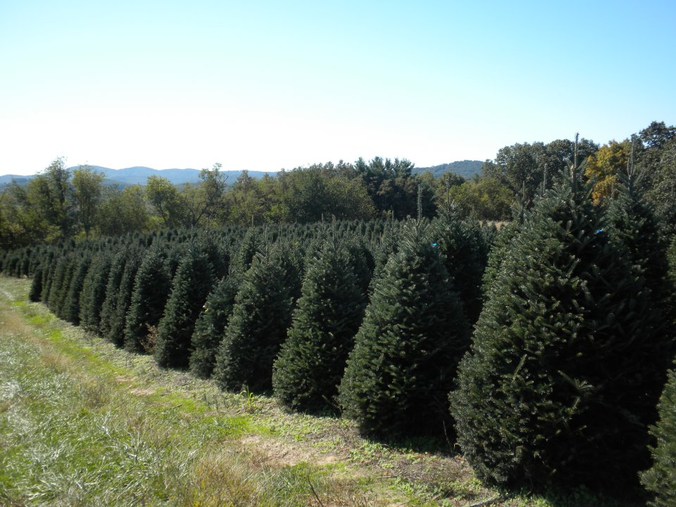 Scott's Tree Farm and Pumpkins Photo.jpg