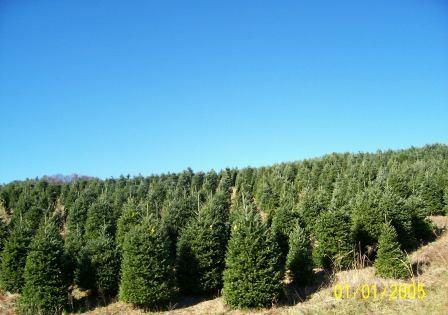 Robert's Tree Farm Photo.jpg