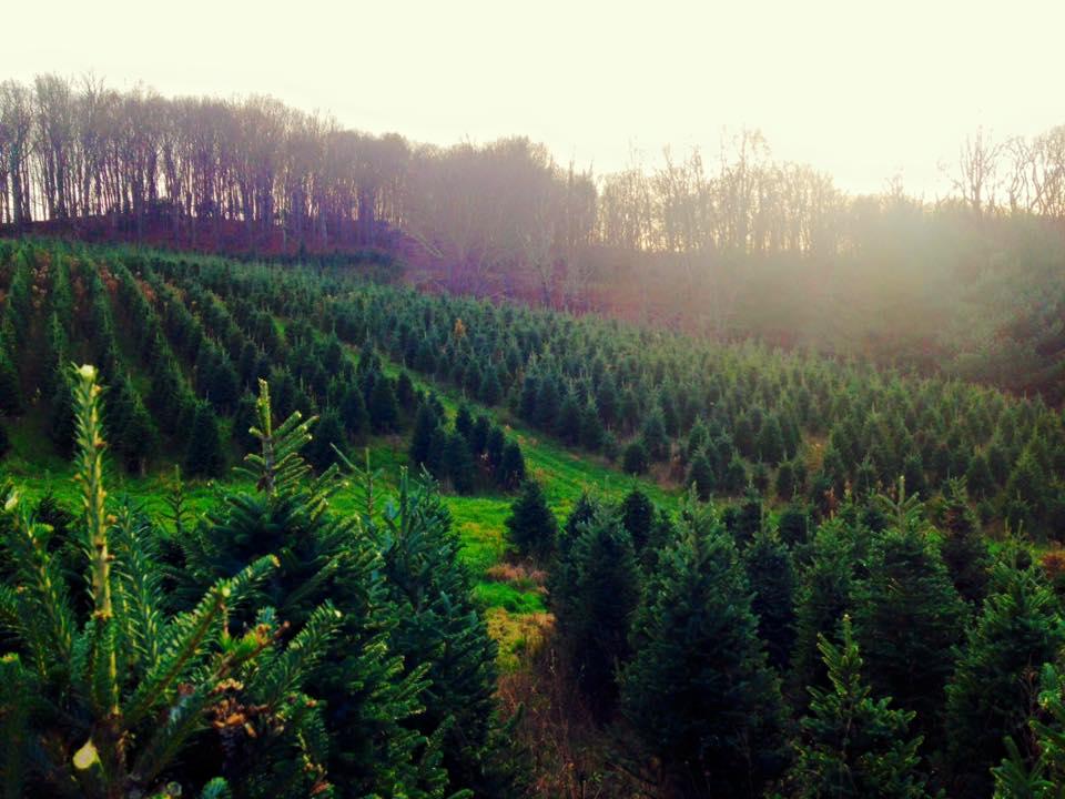 Pardue Farms Photo.jpg