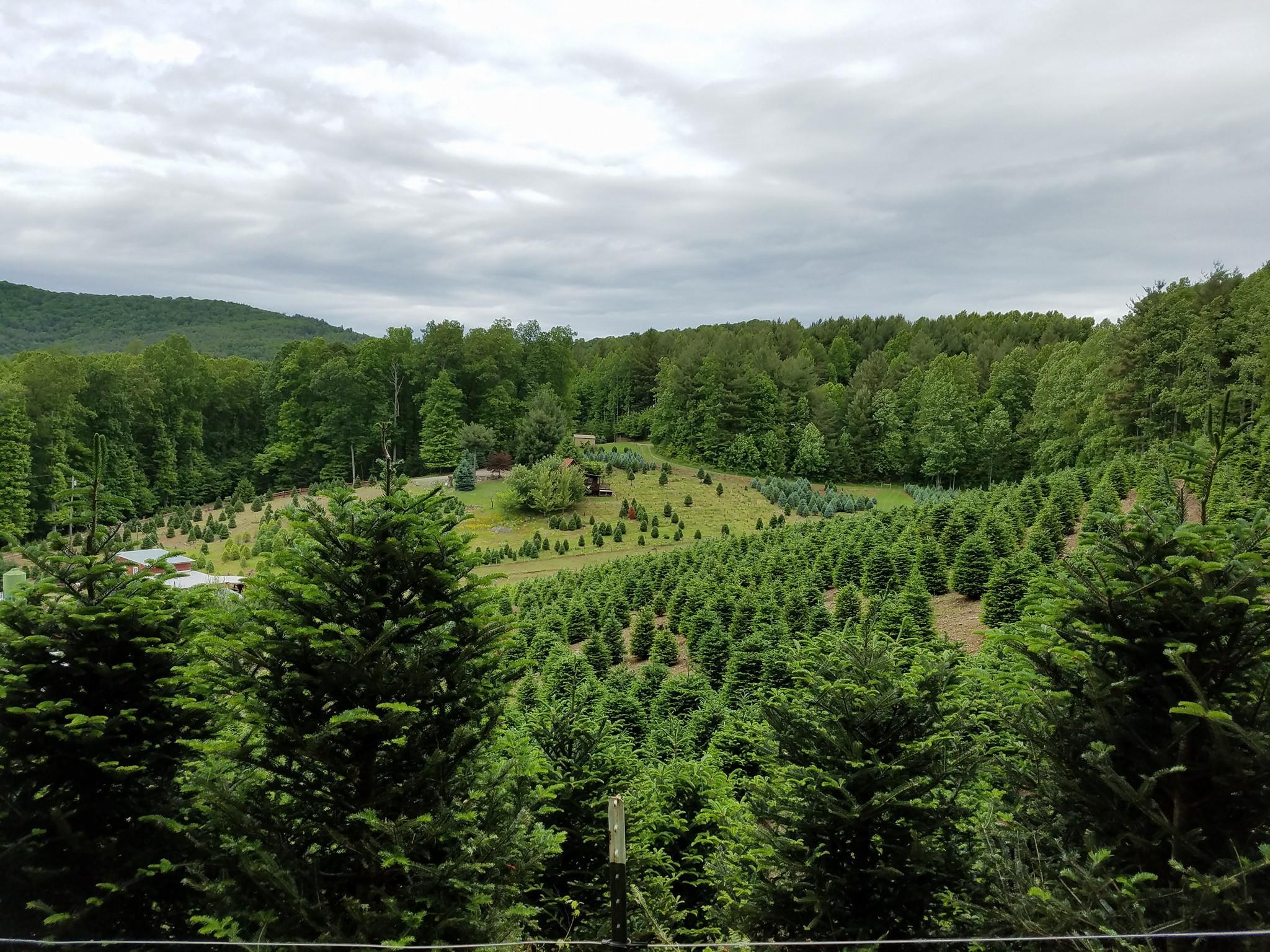 Papa Goats Tree Farm Photo.jpg