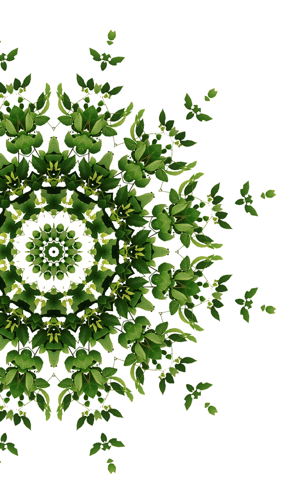 transparent partial mandala cropped.png