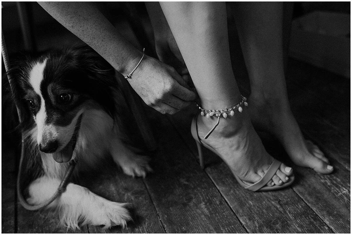 weddings-with-dogs
