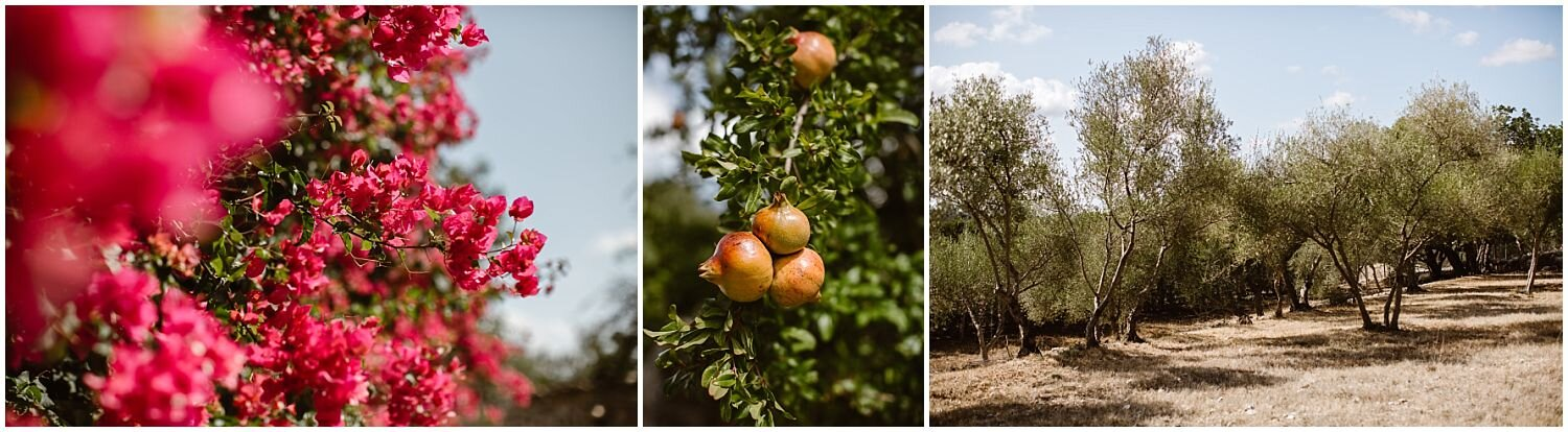 Mallorca-Olives-and-Pomegranate-Trees