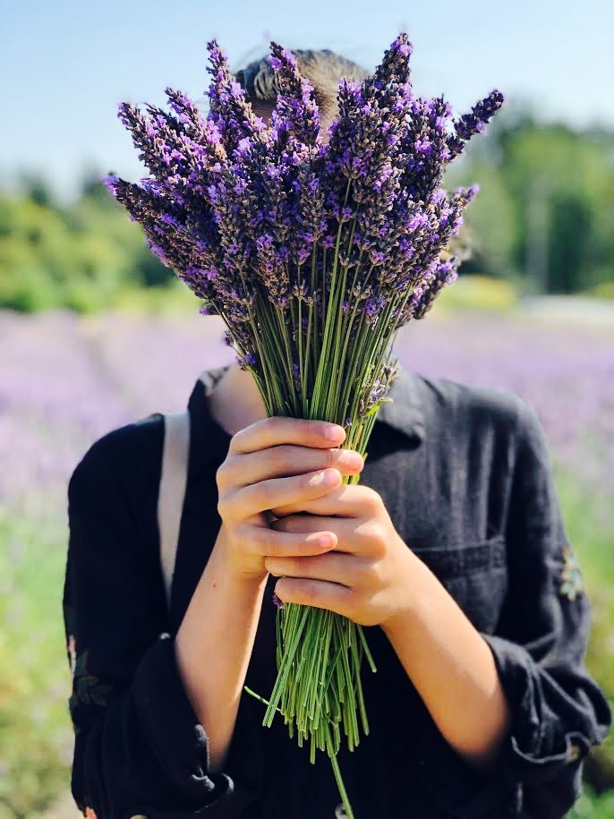 Probably the best effect of lavender: It also makes for great photo shoots!