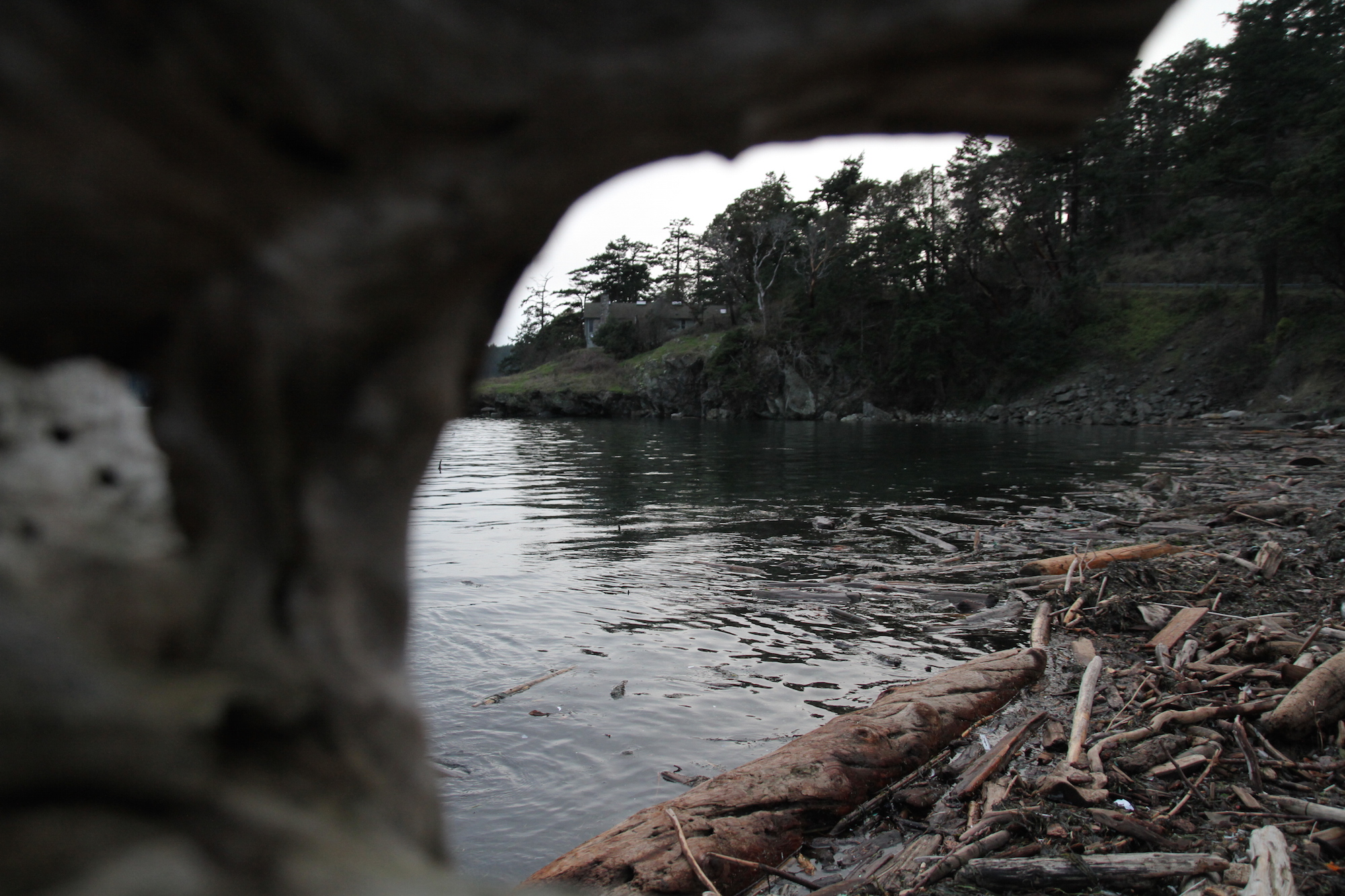 A view through the driftwood. Photo by Gray G.
