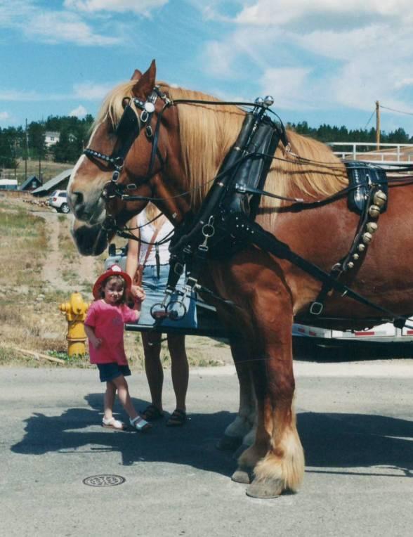south-park-kid-belgian-horses.jpg