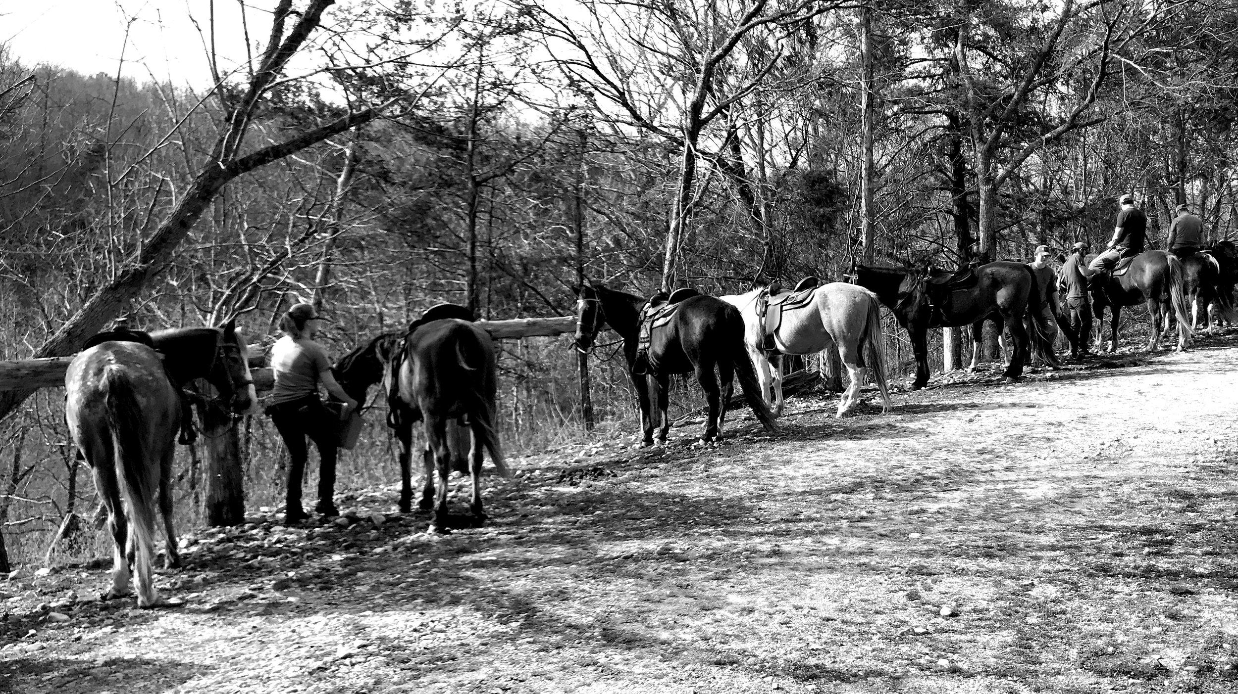 man-2-man-horses.jpg