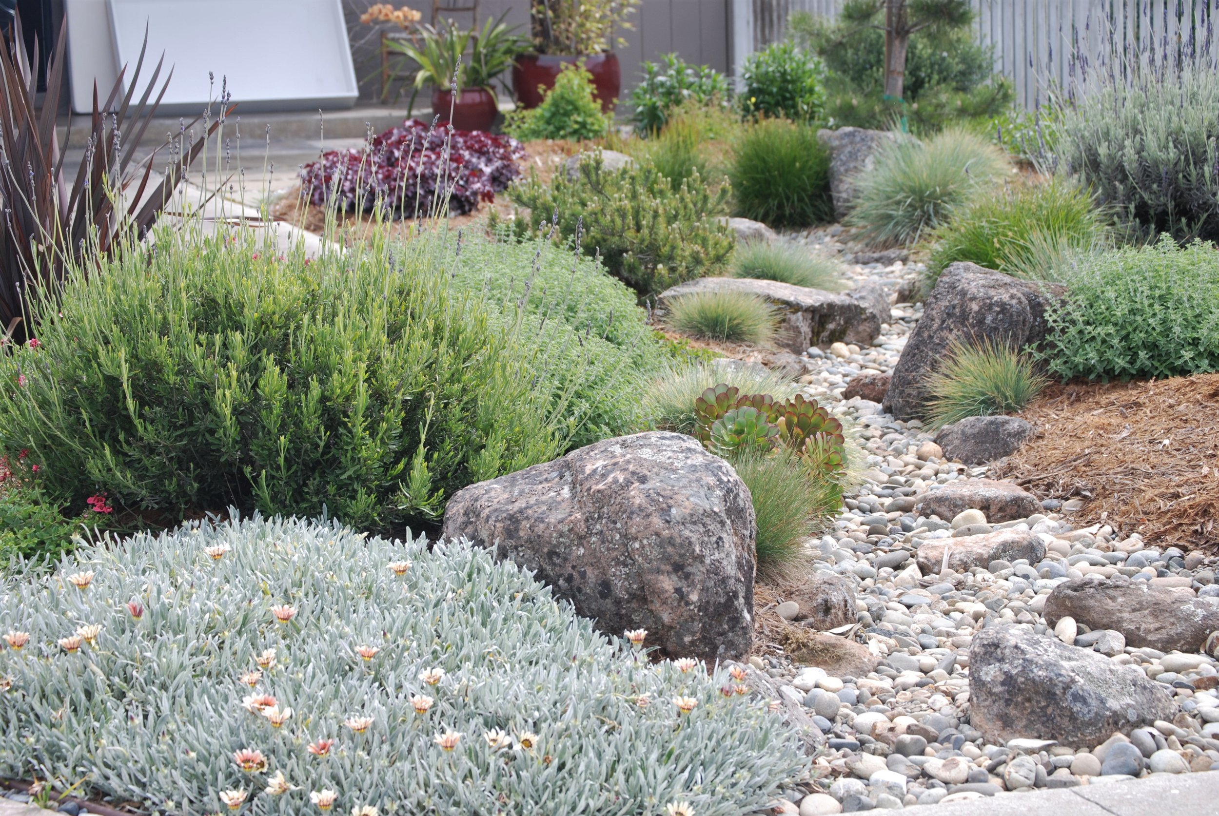 Dry Creekbed Low Water Efficient Landscape.JPG