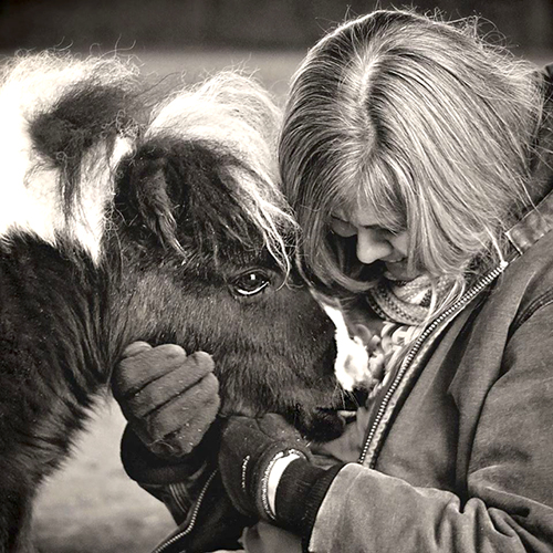 Saving Grace Mini Horse Rescue. Emmet, Michigan