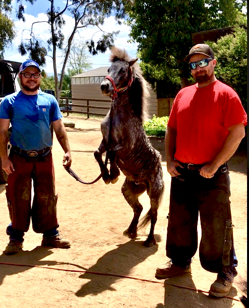 Showing off with 2 Great Farriers