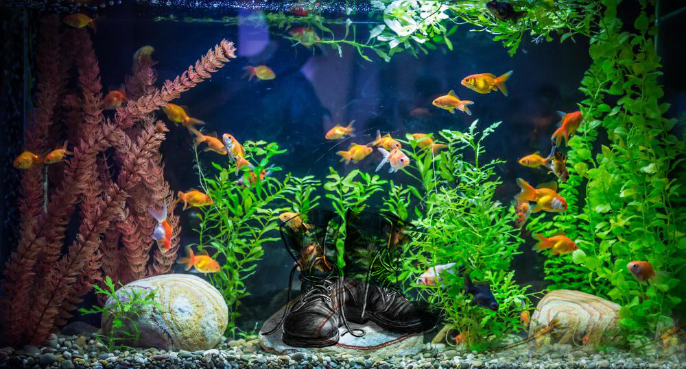 Combat Boots&Fish Tanks - Leadership Issues to be Solved