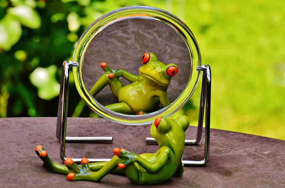 frog-1498908_960_720.jpg