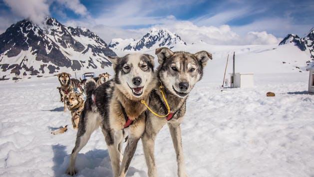 Glacier Dog Sled Tours in Alaska