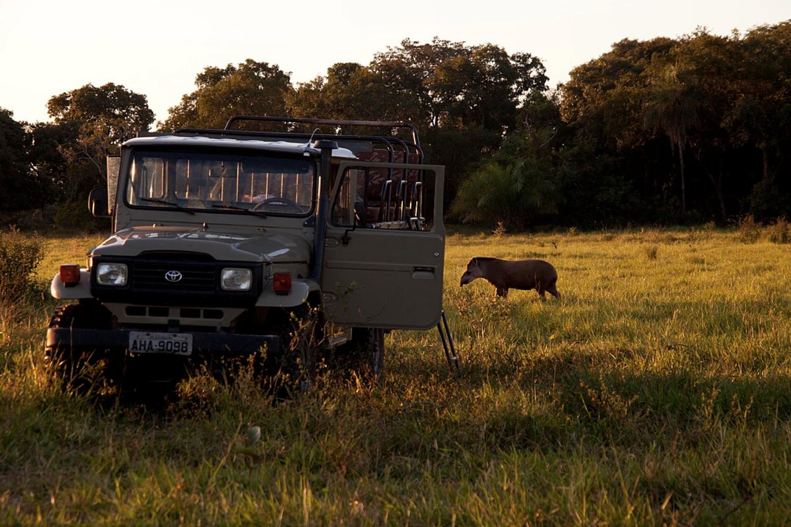 4x4 Game Drive with Tapir