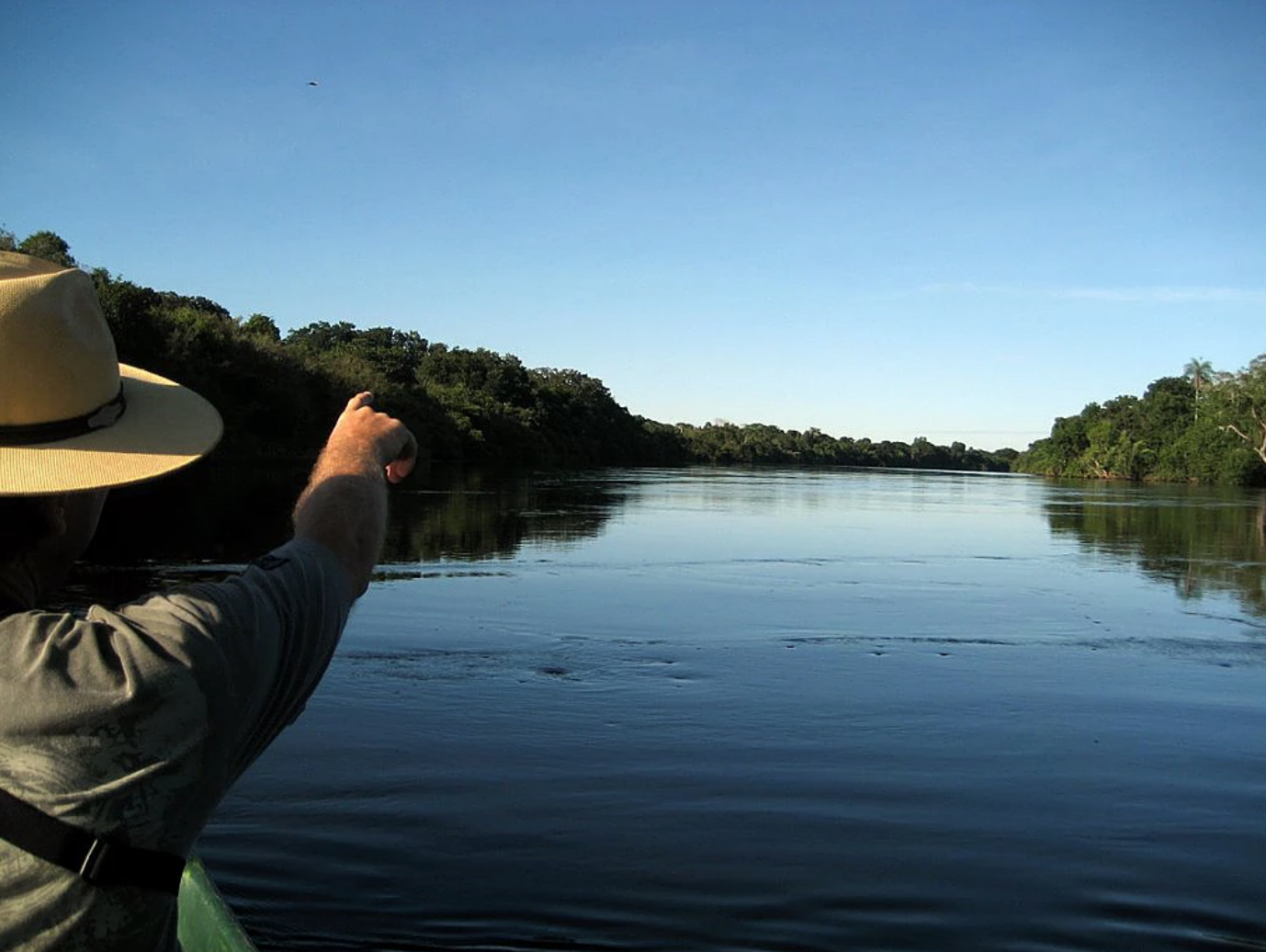 Spotting Wildlife on the Rio Negro