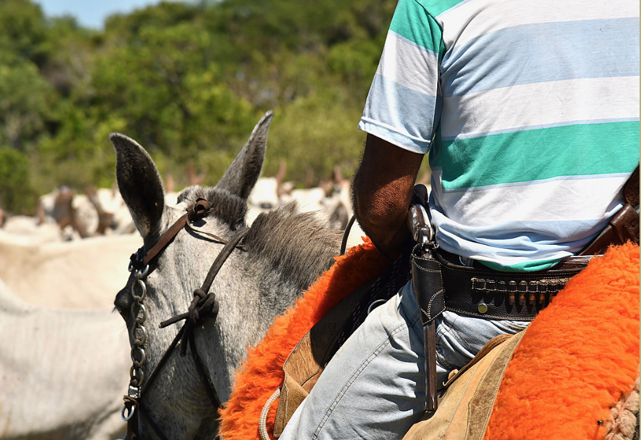 Pantanal Cowboy