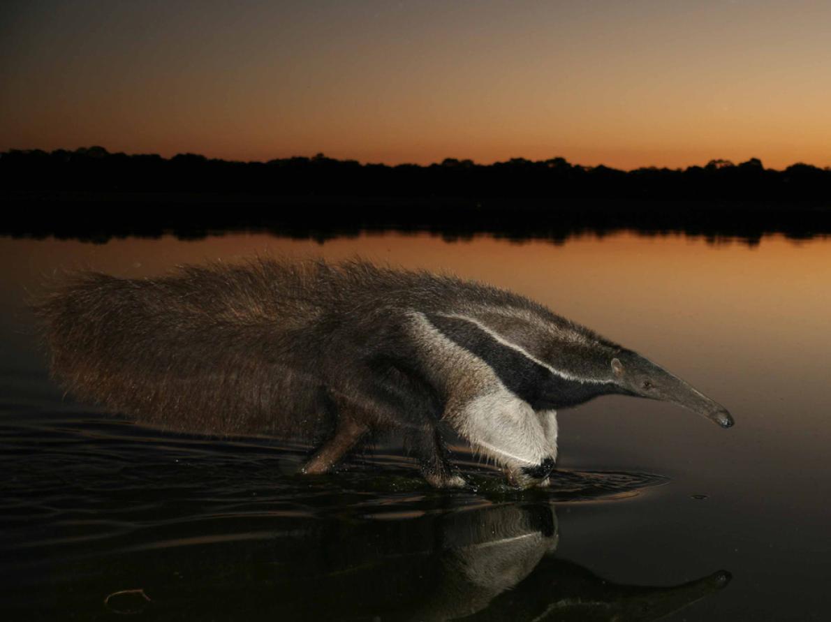 National Geographic Magazine - Photograph by Gerardo Ceballos