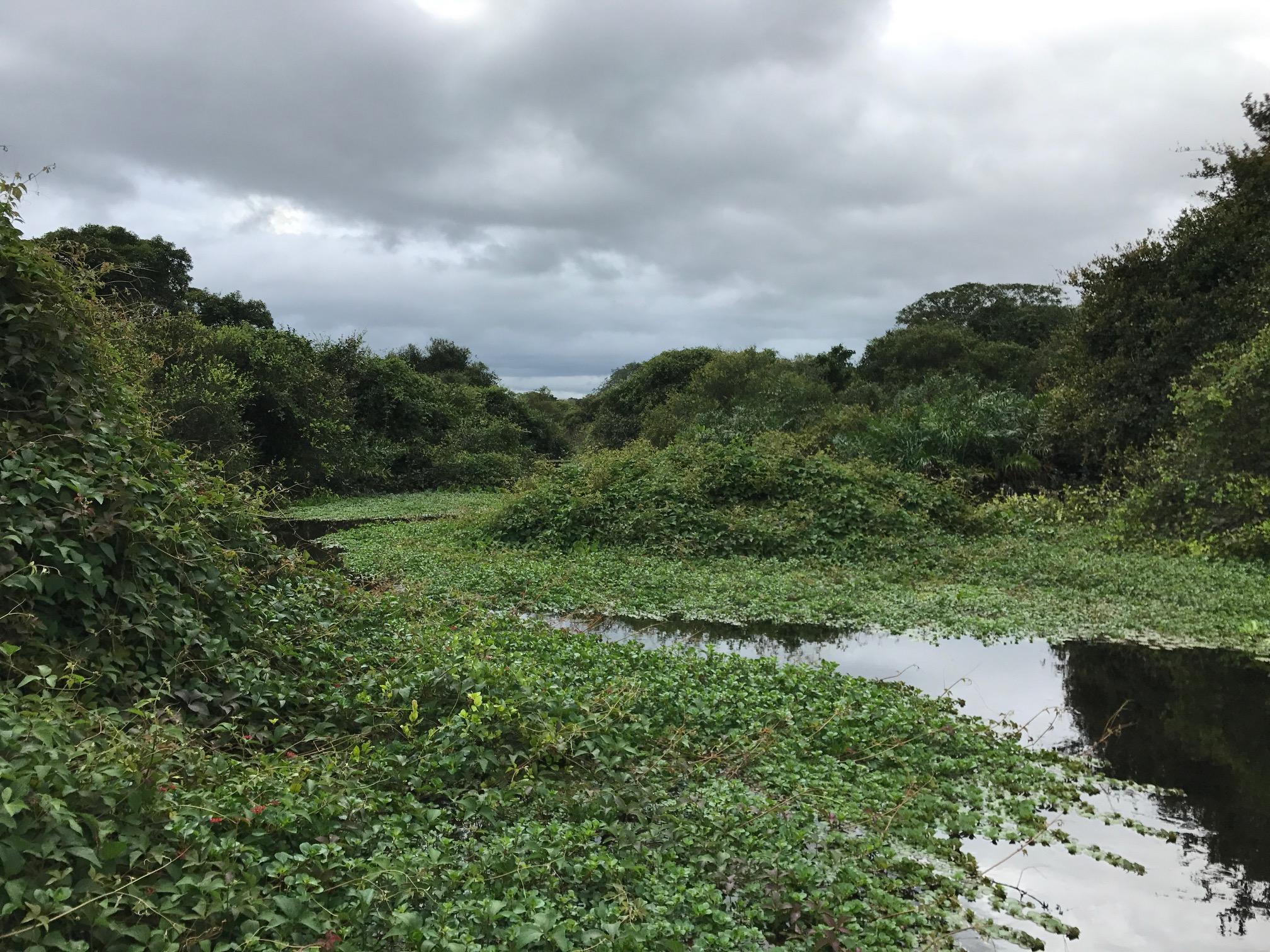 Exploring the Rio Negro