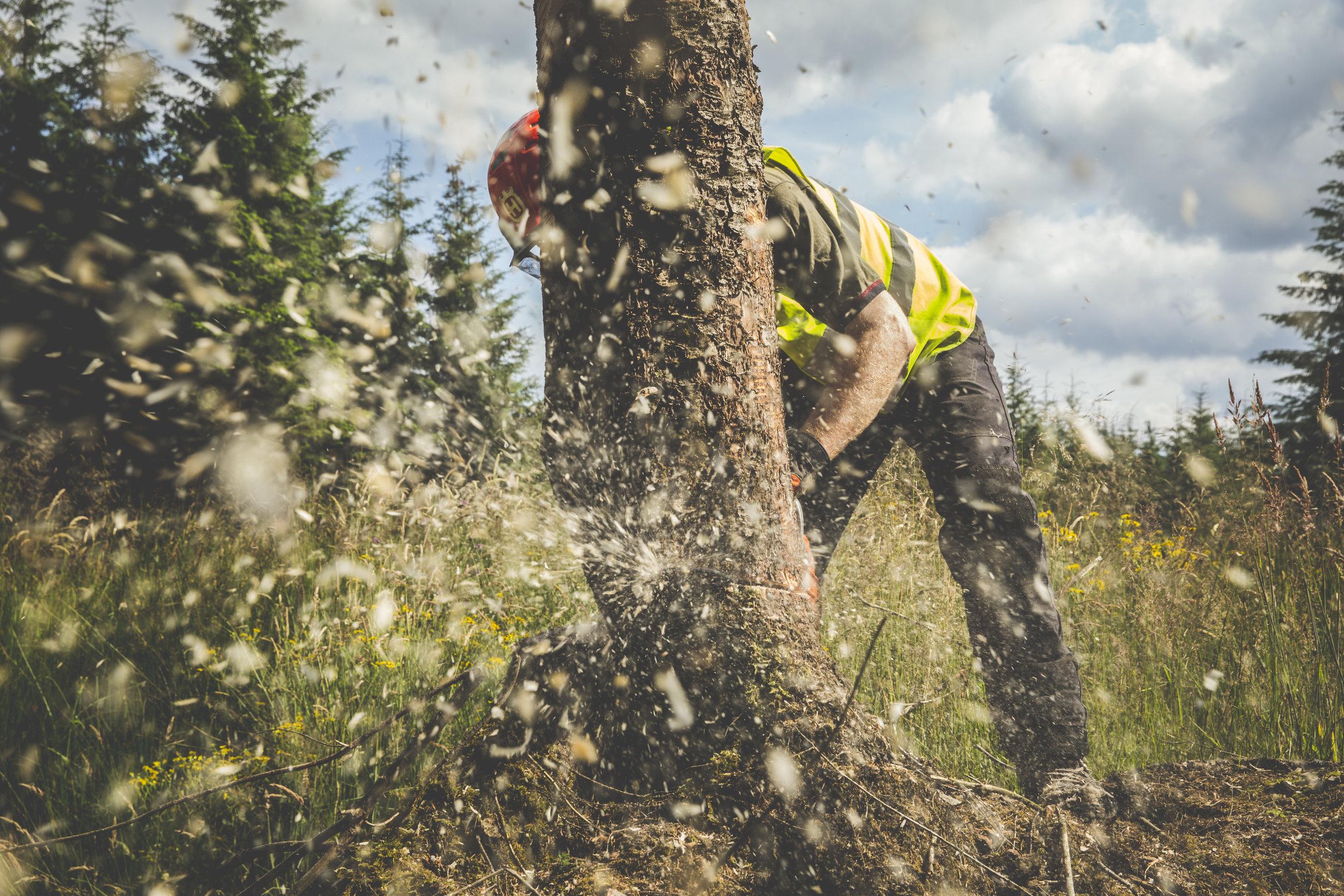 FOREST MANTENANCE