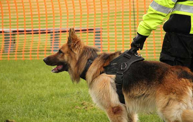 Security Training - Are you looking to secure your home or business? These dogs are trained to keep unwanted personnel off of the premises without leaving the boundaries of the property.