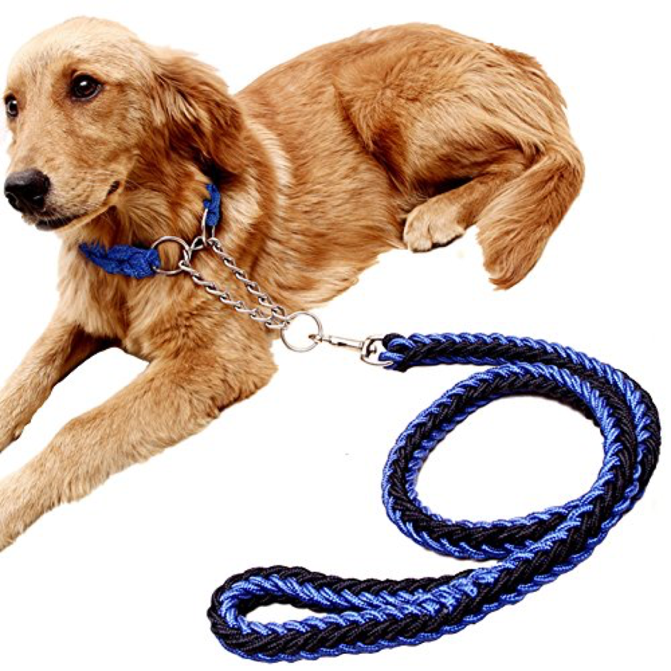 the_martingale_leash.png