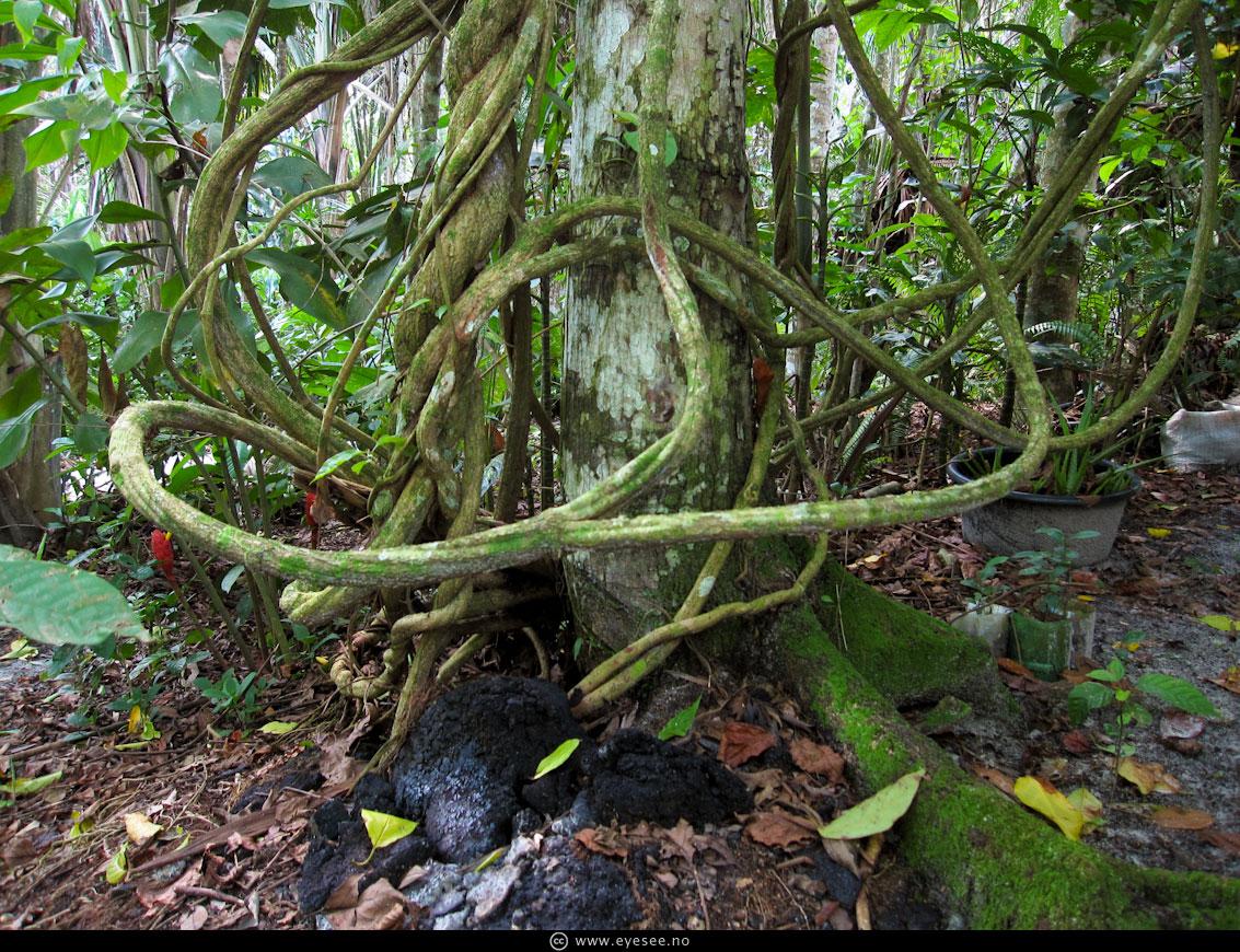ayahuasca.jpg