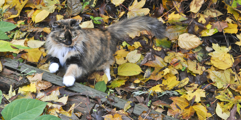 playing-in-the-leaves.jpg