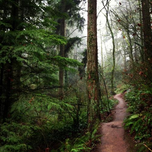 Portland-Trees.jpg