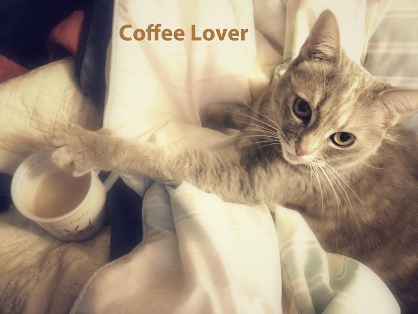 coffee-lover.jpg