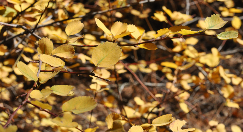 leaves-near-the-lake.jpg