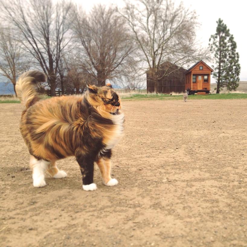 kitty-in-the-wind.jpg